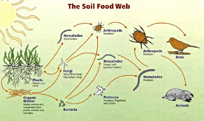 soil-food-web-jpeg-large