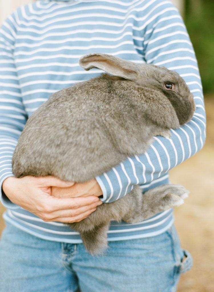 rabbits_0001_000048200011