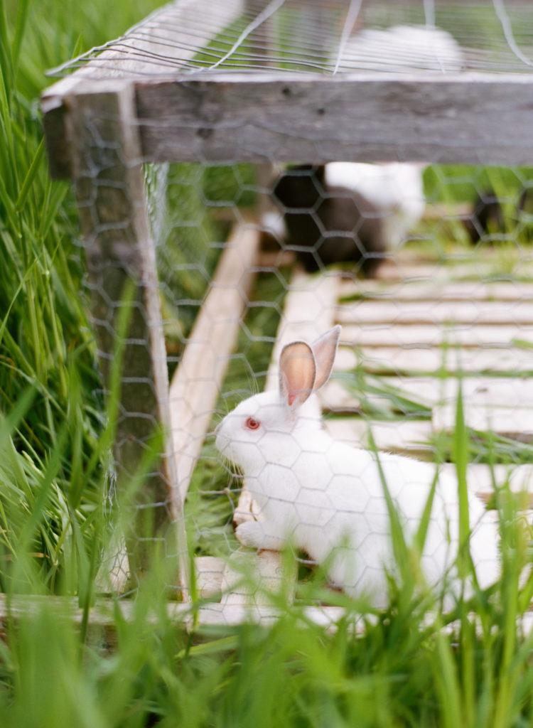 rabbits_0002_000048190013