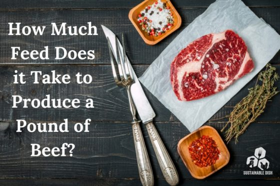 How Much Feed Does it Take To Produce a Pound of Beef?