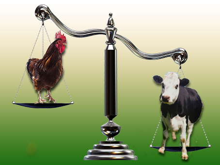 There's a lot more meat on a cow vs. a chicken. Source