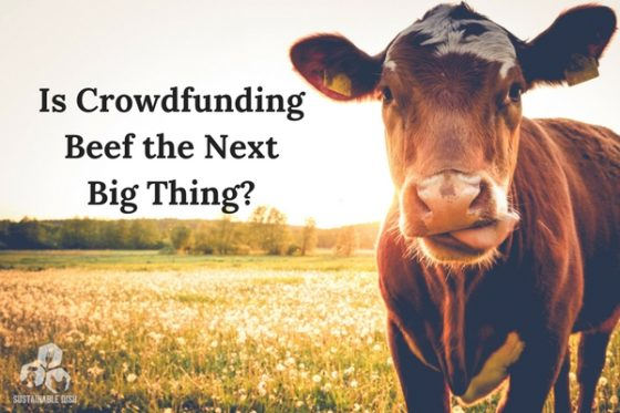 Is Crowdfunding Beef The Next Big Thing?