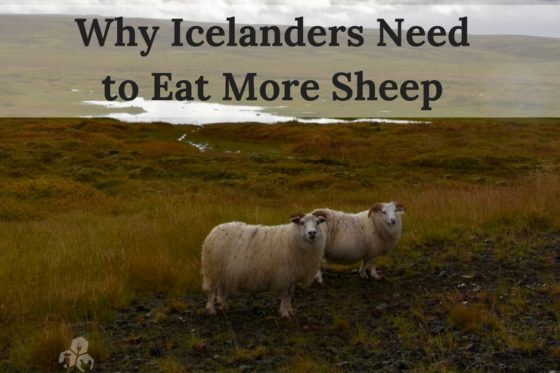 Why Icelanders Need to Eat More Sheep